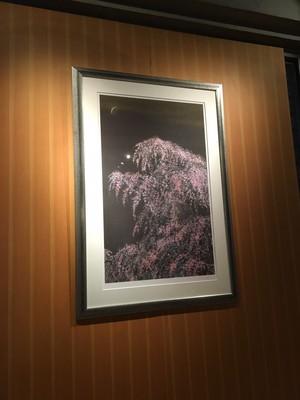 夜桜月下①.JPG